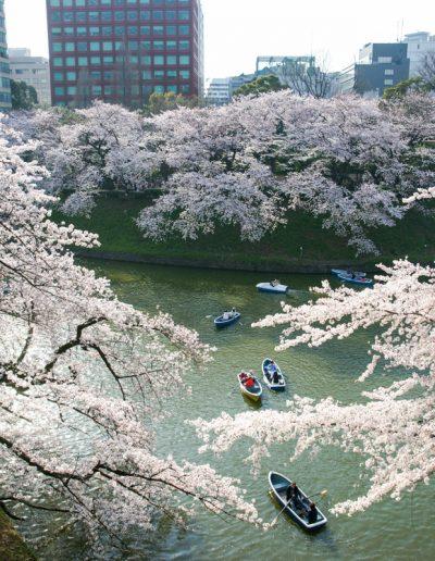 北之丸公園  Kitanomaru-kōen